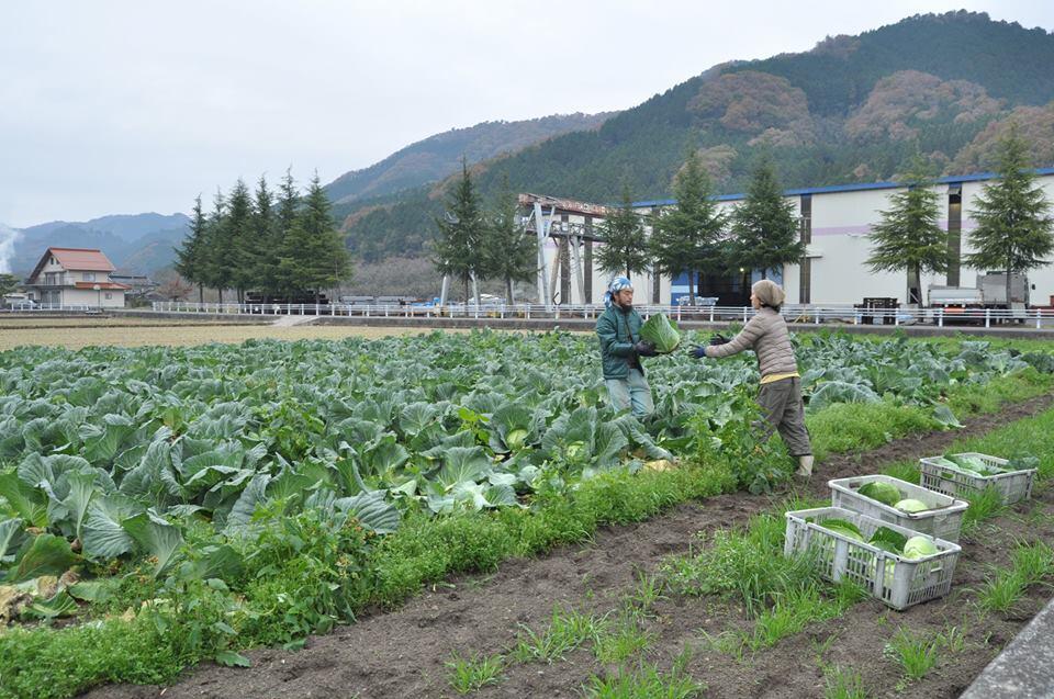 【就農希望者必見!】真庭の農業について紹介する動画