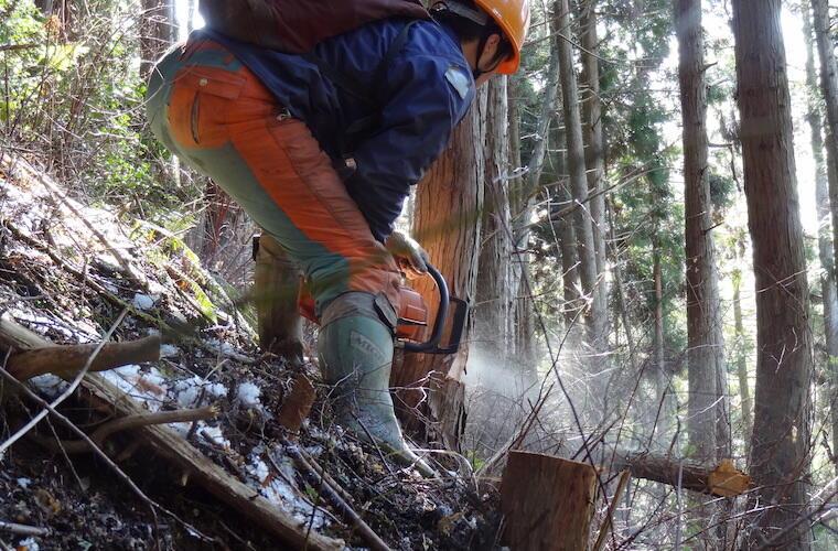 【動画】林業の仕事の紹介